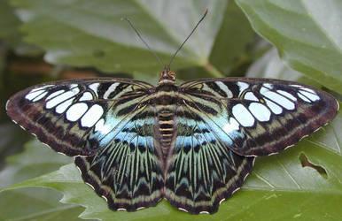 Penang Butterfly Farm 1 by khynnea