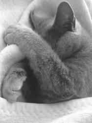 Sleepyhead! by AmpsaMind