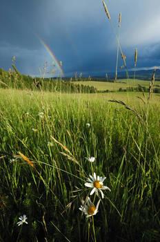 Flowers and Rainbow by My-dynig-soul