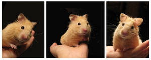 re hamster pause by mouchmouch
