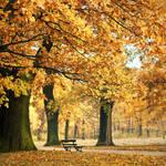 autumn 2010 by rattattart