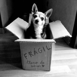 Kiko in a box by stardixa
