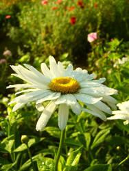 flower power by mollica