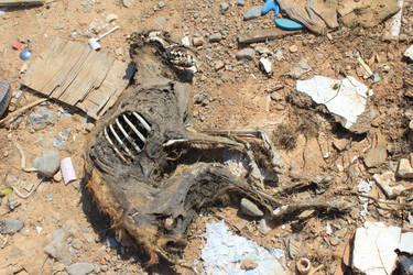 Dead dog by Julianez