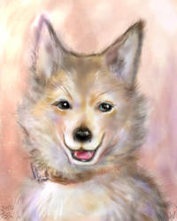 The dog which seems wonderful by miminaga-motono