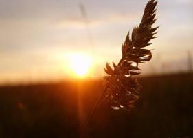 sunset on the field by ennekaramel