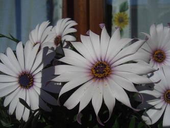 Flowers.1 by Kibiuccia