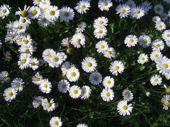 Flowers.2 by Kibiuccia