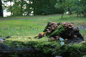 Mushroom 2 by achatinastock