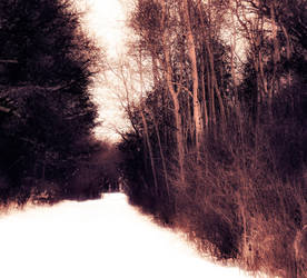 Snow-Covered Trail by emilymh2018