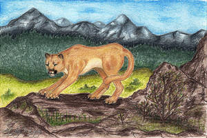 Mountain Lion by Wayvy
