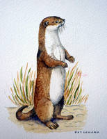 Otter-by-Pat-Coward by newboldworld