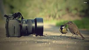 Cameras by Radha-Singh-NJ