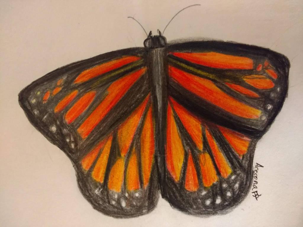 Monarch Butterfly by Arerona