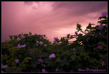 Bramble Sky by allym007