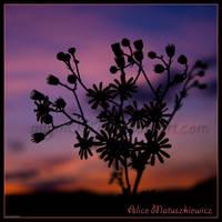 Sunset Little Suns 2 by allym007