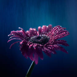 Sonnet for a rainy day by arefin03