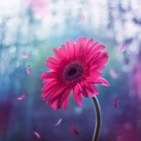 Dream a little dream by arefin03