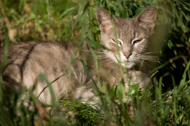 Stray cat in the grass by Mafon