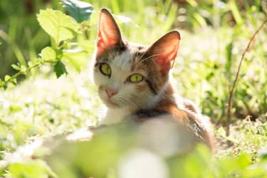 Stray cat in the grass II by Mafon