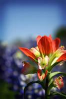 texas wildflowers by prettyfreakjesper