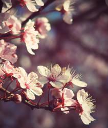 craving spring by prettyfreakjesper