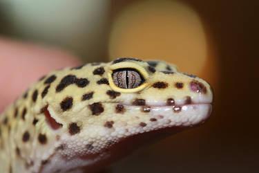 Leopard Gecko by LizardMan101