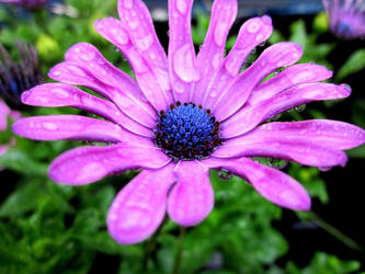 purple delight by skater4life509
