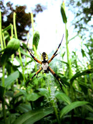 the arachnid by skater4life509