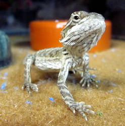 baby horned dragon by skater4life509