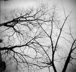 .branches. by wrongdecision