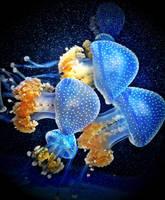 Jelly Fever by crimsonhurricane83