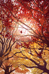 Fall trees by spoiler911