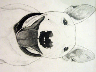 Dog by dreamsforcali