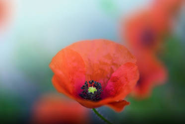 Dresswe Flower Reviews by DressweReviews