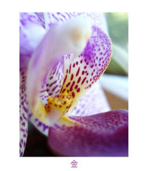 Simple Orchid Dreams by KiwiKassa