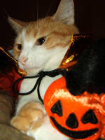 Can I be an Halloween cat ? 2 by MorbidMorticia