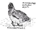 Chicken - Pollo by Bufoland