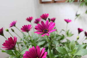 Flower17_1 by TANTTA69
