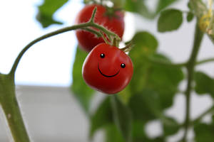 Happy Tomato by TANTTA69