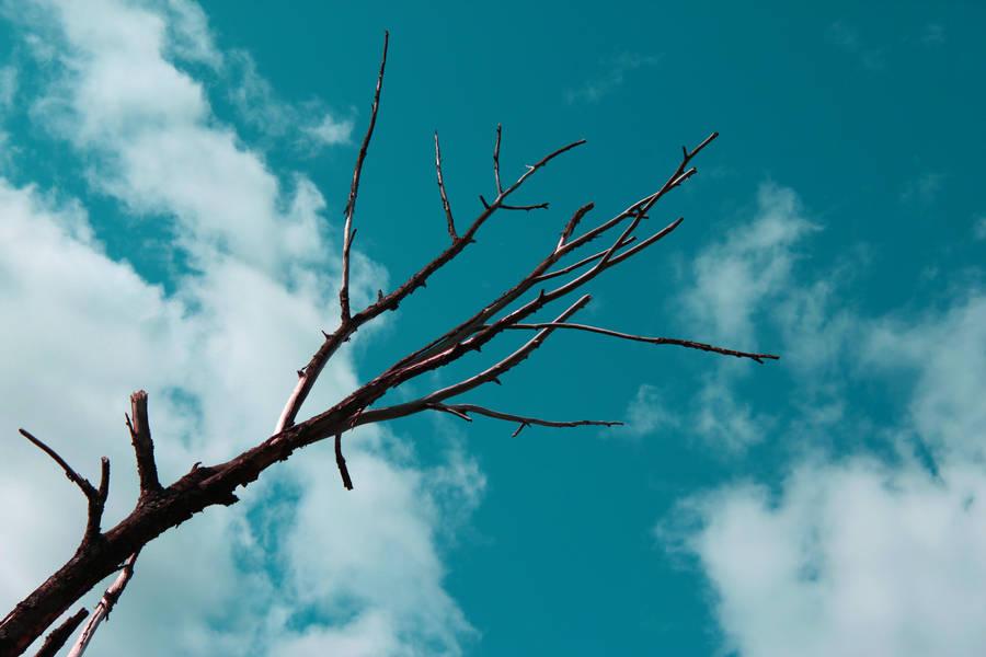 URBAN SKY by TANTTA69