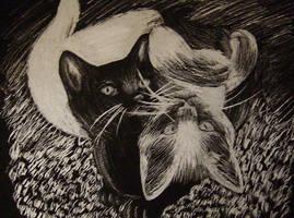 'Yin and Yang' Scratchart by DEMIAH