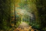 A Light Unto My Path by Phatpuppyart-Studios