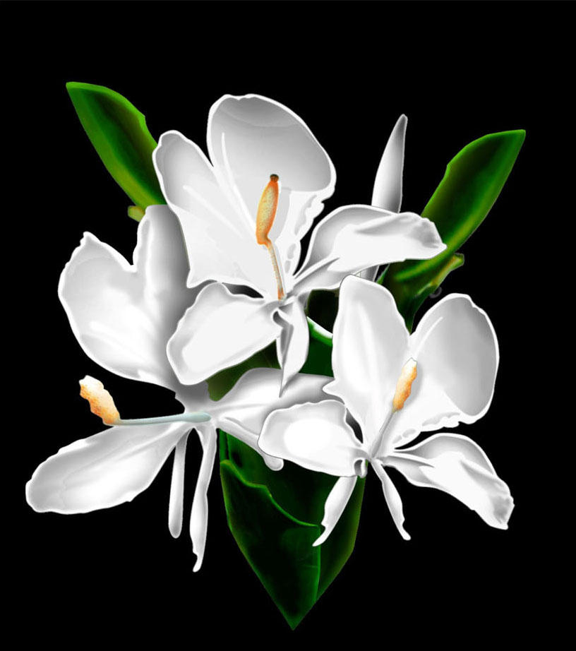 Photoshop Flowers White Ginger By Jbcaccam On Deviantart