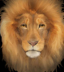 Lion by ICS1999