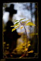 Gold autumn 06 by Praetorian124