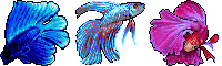 Betta Icons by Eliminate