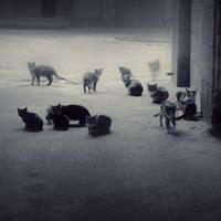 Gost cat by leenik