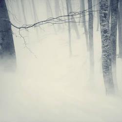 cold wind by leenik