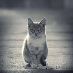 Buddha Cat by leenik